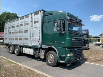 Camion bétaillère DAF XF105/410 Spacecup Menke 4 Stock
